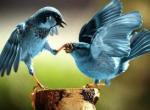 "App.net:做一个""对""的Twitter"