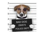 警务大数据案例:用手机移动数据预测犯罪