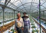 """深度学习""""民主化""""案例:日本农民研发智能黄瓜分拣机"""