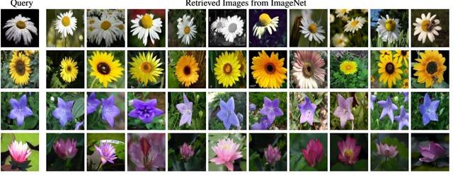 深度学习-花朵识别